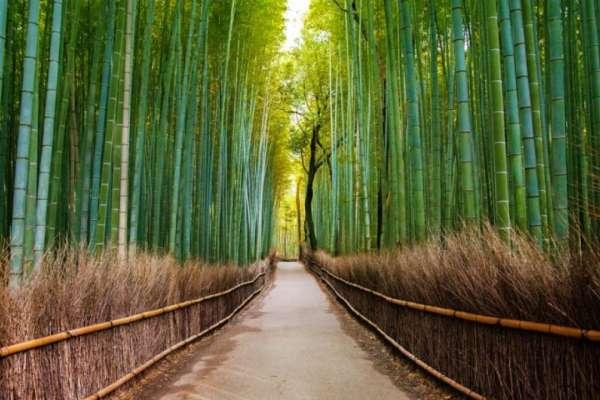 peaceful bamboo garen